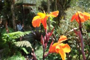 pflanzen-satt-in-panama